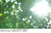 Bright sunlight through the green foliage in canopy of trees. Slow motion, beautiful big flashes and glare in summer. Стоковое видео, видеограф Dmitry Domashenko / Фотобанк Лори