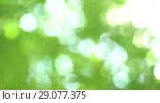 Defocused bright summer sunny green background with bokeh and glares. Summer warm afternoon in canopy of trees. Стоковое видео, видеограф Dmitry Domashenko / Фотобанк Лори