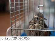 Птичка в клетке. Стоковое фото, фотограф Amir Navrutdinov / Фотобанк Лори