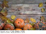Купить «Orange pumpkins», фото № 29090735, снято 14 сентября 2018 г. (c) Типляшина Евгения / Фотобанк Лори