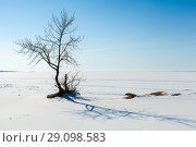 Купить «Small bare tree in sunny winter day», фото № 29098583, снято 31 марта 2018 г. (c) EugeneSergeev / Фотобанк Лори