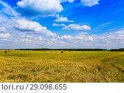 Купить «Русское небо и поле со скошенным сеном, убранным в валки в ясный летний день в августе. Подмосковье.», фото № 29098655, снято 20 августа 2018 г. (c) Владимир Устенко / Фотобанк Лори