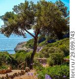 Cala Fornells View in Paguera, Majorca, Spain. Стоковое фото, фотограф Маргарита Бородина / Фотобанк Лори