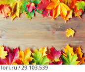 Купить «Autumn background. Maple colorful autumn leaves on the wooden background», фото № 29103539, снято 11 октября 2017 г. (c) Зезелина Марина / Фотобанк Лори