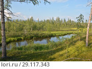 Купить «Small pond among the summer taiga.», фото № 29117343, снято 9 августа 2015 г. (c) Сергей Дрозд / Фотобанк Лори