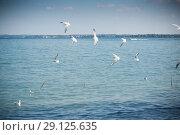 Купить «Beautiful Lake Garda in Italy, sunny summer day. September 7 2018», фото № 29125635, снято 7 сентября 2018 г. (c) Peredniankina / Фотобанк Лори