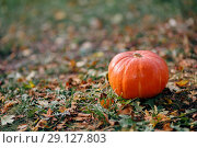 Купить «Pumpkin on the ground, strewn with autumn leaves, as a symbol of Halloween», фото № 29127803, снято 22 сентября 2018 г. (c) Анастасия Улитко / Фотобанк Лори
