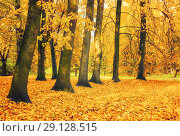 Купить «Autumn picturesque landscape. Autumn trees with yellowed foliage in October park. Colorful autumn landscape in bright tones», фото № 29128515, снято 10 октября 2017 г. (c) Зезелина Марина / Фотобанк Лори