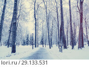 Купить «Winter landscape with snowy trees along the winter park - winter snowy scene in vintage tones», фото № 29133531, снято 11 декабря 2017 г. (c) Зезелина Марина / Фотобанк Лори