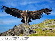 Купить «griffin sitting on stone against sky», фото № 29138291, снято 17 июля 2011 г. (c) Яков Филимонов / Фотобанк Лори