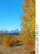 Купить «Bright Autumn Landscape. Yellow birch leaves against the blue cloudless sky and snow-capped mountains. Free space for text and seasonal calendar. Natural autumn background», фото № 29145171, снято 22 сентября 2018 г. (c) Виктория Катьянова / Фотобанк Лори