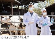 Купить «man and woman veterinarians happily standing close to cows on the farm», фото № 29149471, снято 18 апреля 2019 г. (c) Яков Филимонов / Фотобанк Лори