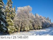 Купить «Зимний лес в солнечную погоду», фото № 29149691, снято 15 ноября 2016 г. (c) Елена Коромыслова / Фотобанк Лори