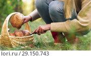 Купить «young woman picking mushrooms in autumn forest», видеоролик № 29150743, снято 24 сентября 2018 г. (c) Syda Productions / Фотобанк Лори