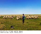 Пастух и собака пасут овец в долине. Стоковое фото, фотограф Наталья Волкова / Фотобанк Лори
