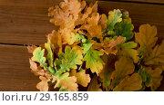 Купить «oak leaves in autumn colors on wooden table», видеоролик № 29165859, снято 30 сентября 2018 г. (c) Syda Productions / Фотобанк Лори