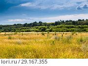 Купить «Галичья гора», фото № 29167355, снято 7 июля 2018 г. (c) Ольга Сейфутдинова / Фотобанк Лори