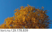 Купить «Autumn trees with yellowing leaves against the sky», видеоролик № 29178839, снято 29 сентября 2018 г. (c) Игорь Жоров / Фотобанк Лори