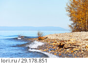 Купить «Lake Baikal on a sunny day in September. Yellow birch on the pebble shore. High water level in the lake, coastal shrubs hidden by water», фото № 29178851, снято 30 сентября 2018 г. (c) Виктория Катьянова / Фотобанк Лори