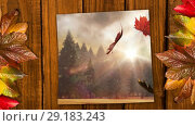 Купить «Screen showing forest, falling autumn leaves and bright sunlight 4k», видеоролик № 29183243, снято 19 апреля 2019 г. (c) Wavebreak Media / Фотобанк Лори