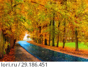 Купить «Autumn landscape. Autumn trees with yellow foliage and autumn leaves on the wet footpath in park alley after rain», фото № 29186451, снято 6 октября 2017 г. (c) Зезелина Марина / Фотобанк Лори