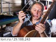 Купить «Man is repairing modern acoustic guitar», фото № 29188243, снято 18 сентября 2017 г. (c) Яков Филимонов / Фотобанк Лори