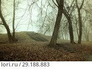 Купить «Fall landscape. Foggy fall park alley with bare fall trees and fallen autumn leaves covering the old stone stairs», фото № 29188883, снято 8 ноября 2017 г. (c) Зезелина Марина / Фотобанк Лори