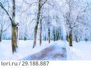 Купить «Winter picturesque landscape with snowy winter trees along the winter park - winter snowy scene in cold tones», фото № 29188887, снято 11 декабря 2017 г. (c) Зезелина Марина / Фотобанк Лори