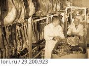 Купить «Farm workers checking condition of jamon», фото № 29200923, снято 15 сентября 2019 г. (c) Яков Филимонов / Фотобанк Лори