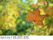 Купить «Red-yellow leaf on the glass with water drops», фото № 29207335, снято 27 сентября 2018 г. (c) Валерий Смирнов / Фотобанк Лори