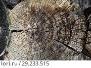 Купить «log cut with shallow depth of field», фото № 29233515, снято 14 октября 2018 г. (c) Дмитрий Бачтуб / Фотобанк Лори