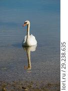 Белый лебедь с отражением на озере солнечным летним днем. Стоковое фото, фотограф Виктор Карасев / Фотобанк Лори