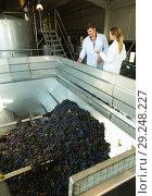 Купить «Two engineers of winery controlling process», фото № 29248227, снято 13 сентября 2018 г. (c) Яков Филимонов / Фотобанк Лори