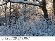 Купить «Landscape in the park», фото № 29249067, снято 19 января 2010 г. (c) Argument / Фотобанк Лори