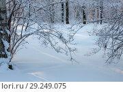 Купить «Branches under the snow», фото № 29249075, снято 19 января 2010 г. (c) Argument / Фотобанк Лори