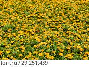 Купить «Flowers», фото № 29251439, снято 3 июля 2010 г. (c) age Fotostock / Фотобанк Лори