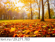 Купить «Autumn trees in sunny autumn park lit by sunshine - sunny autumn landscape in bright sunlight. Autumn park sunny scene», фото № 29271783, снято 18 октября 2018 г. (c) Зезелина Марина / Фотобанк Лори