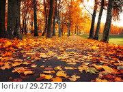Купить «Autumn picturesque landscape. Autumn trees with fallen orange foliage in October park. Colorful autumn landscape in vivid tones», фото № 29272799, снято 17 октября 2018 г. (c) Зезелина Марина / Фотобанк Лори