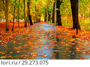 Купить «Autumn colorful landscape. Autumn trees and autumn leaves on the wet asphalt road in autumn park alley after rain», фото № 29273075, снято 6 октября 2017 г. (c) Зезелина Марина / Фотобанк Лори