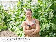 Female farmer in glasshouse. Стоковое фото, фотограф Яков Филимонов / Фотобанк Лори