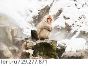 Купить «japanese macaques or snow monkeys at hot spring», фото № 29277871, снято 7 февраля 2018 г. (c) Syda Productions / Фотобанк Лори