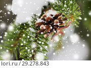 Купить «fir branch with snow and cone in winter forest», фото № 29278843, снято 11 ноября 2016 г. (c) Syda Productions / Фотобанк Лори