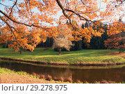 Купить «Oak branches with dry leaves hang over the water in Pavlovsk Park», фото № 29278975, снято 16 октября 2018 г. (c) Алексей Маринченко / Фотобанк Лори