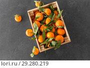 close up of mandarins on slate table top. Стоковое фото, фотограф Syda Productions / Фотобанк Лори