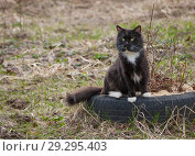 Black fluffy cat sitting on an old tire in garden in front of house. Стоковое фото, фотограф Наталья Николаева / Фотобанк Лори