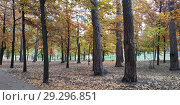 Nice autumnal scene in the forest. Стоковое фото, фотограф Сергей Бочаров / Фотобанк Лори