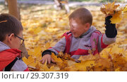 Купить «Autumn. Small children in the yellow leaves. Children play in the street with fallen leaves. Autumn grove of birches and maples. Boys throw up fallen leaves of trees in the top. Children sit across from each other on a carpet of yellow leaves and throw leaves into each other. Happy kids on the street», видеоролик № 29307319, снято 13 октября 2018 г. (c) Константин Мерцалов / Фотобанк Лори
