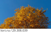 Купить «Autumn trees with yellowing leaves against the sky», видеоролик № 29308039, снято 29 сентября 2018 г. (c) Игорь Жоров / Фотобанк Лори