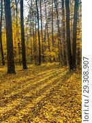 Купить «Томилинский лесопарк. Осень», фото № 29308907, снято 15 октября 2018 г. (c) Владимир Сергеев / Фотобанк Лори