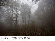 Купить «Fog in the forest», фото № 29309079, снято 21 октября 2018 г. (c) Яна Королёва / Фотобанк Лори